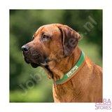 Collier de chien personnalisé 002 avec votre propre nom_